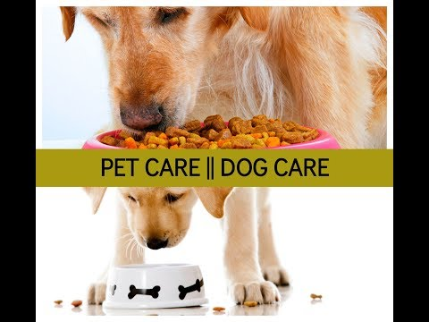 Pet Care | Dog Care - Tips For Dog Care