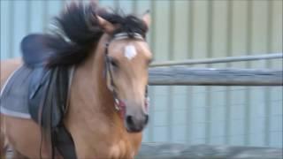 Don't Let Me Down ~ Horses