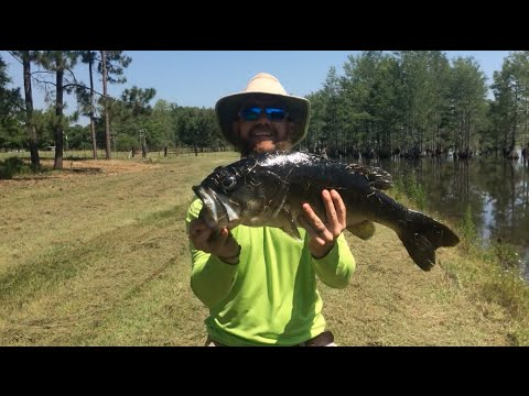 Woods n 39 water with georgia outdoorsman s1 e11 monster for Georgia fish farms