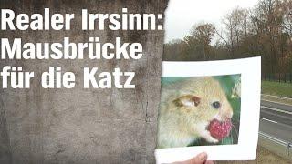 Realer Irrsinn: Die Haselmausbrücke von Vilshofen