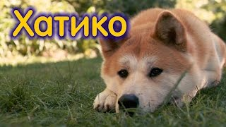 Собаки, ставшие легендой: акита-ину Хатико (Hachi, Hachiko)