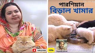 Cat Farm | বিড়াল পালন | পারভিন আক্তার | बिल्ली खेत | مزرعة القط | বিদেশী জাতের বিড়ালের খামার