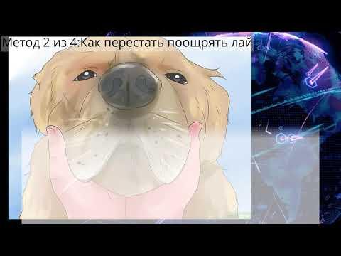 Как отучить собаку лаять на людей
