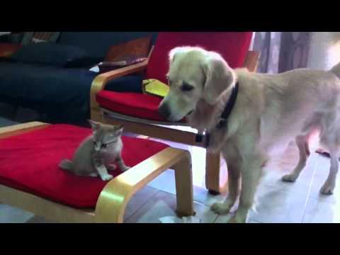 Cat hisses at dog