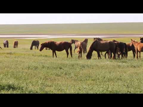 Дикие лошади Ростовской области