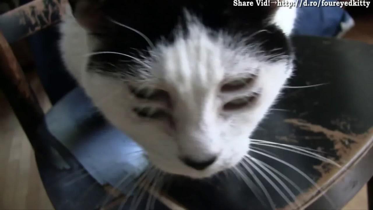 blaze the cat plush