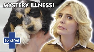 Owner COLLAPSES from fear Puppy Could Have DEADLY Virus  | Full Episode | Bondi Vet