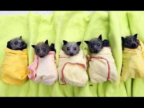 Bat Rehabilitation Center of Feldman Ecopark прибыло пополнение: 401 летучая мыша