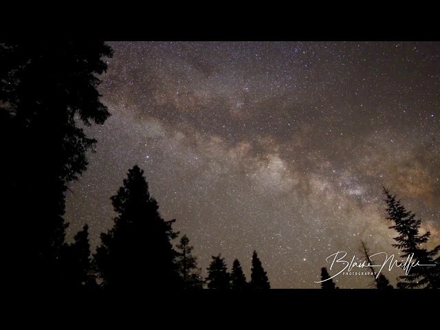 Forest Milky Way Time-lapse
