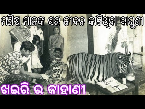 "ମଣିଷ ମାନଙ୍କ ସହ ଜୀବନ କାଟିଥିବା ବାଘୁଣୀ ""ଖଇରି"" | Khairi :The Beloved Tigress Of Saroj Raj Choudhury"
