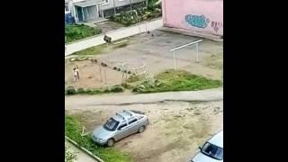 Дурные девки играют собаку