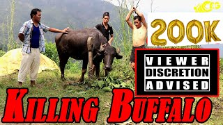 Killing Buffalo in Nepali traditional Style [viewer discretion advised]