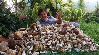 Как вырастить много белых грибов на своем участке (сентябрь)