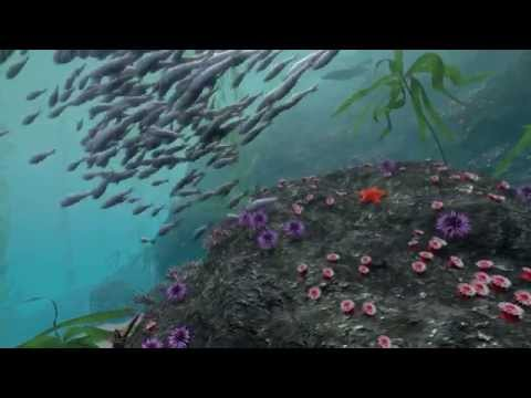 Take a Virtual Dive in a Kelp Forest | California Academy of Sciences