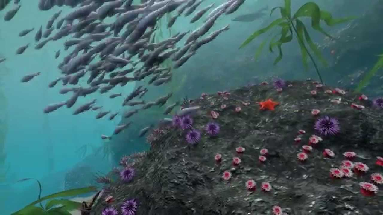 Take A Virtual Dive In A Kelp Forest