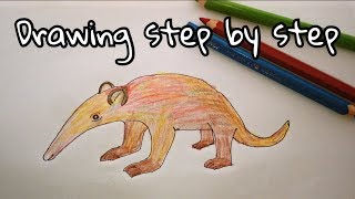 How to Draw Animals for Kids, Drawing Anteater Art Video for Baby