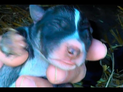 Баба у дога на пичужке видео онлайн фото 122-125