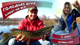 ГОЛОДНАЯ ЩУКА клюет на ВСЁ! Осенняя рыбалка на реке ПСЕЛ и сбор маслят