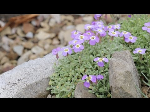 Experimental Garden Aims to Save Alpine Plants