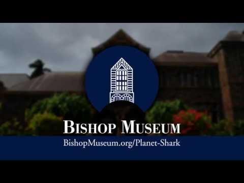 RHTV - Bishop Museum: Planet Shark