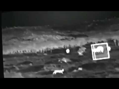 Serval & Lion in Infra-Red & Thermal Images  September 23,  2016
