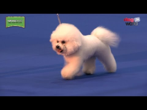 UK Toy Dog 2017 - Best in Show