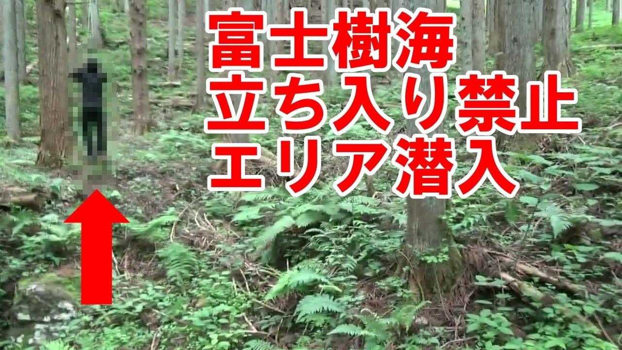 「富士の樹海」の画像検索結果