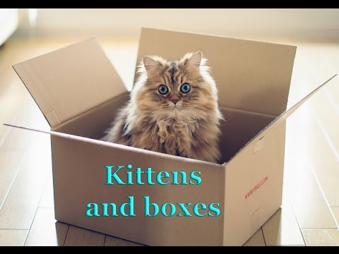 Cute kittens and boxes:  funny cat video