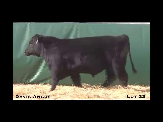 Davis Angus Lot 23