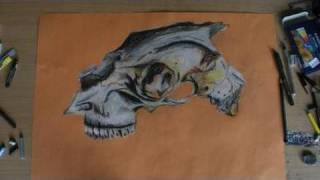 Goat Skull drawn in oil pastels
