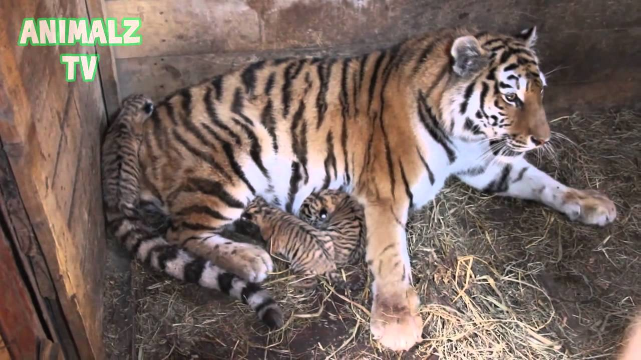 Cute Baby Animals Living In Zoo Compilation 2015 New Hd Video