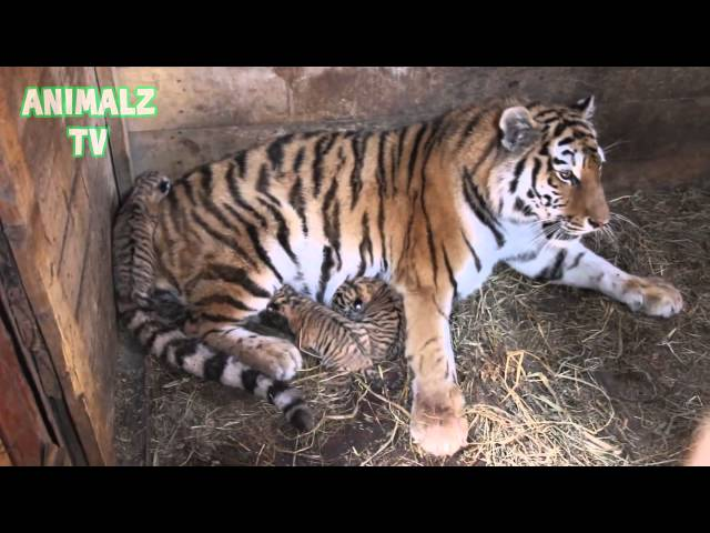 Cute Baby Animals Living In Zoo Compilation 2015 [NEW HD VIDEO]