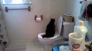 My Potty trained cat typsy peeing in the toilet!
