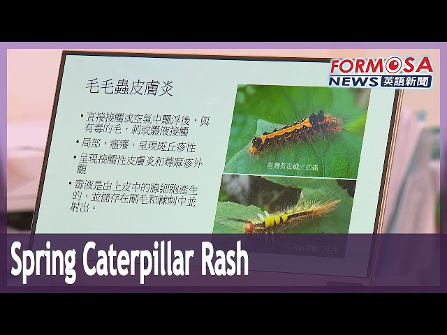 Caterpillar bristles cause spate of minor rashes in Kaohsiung