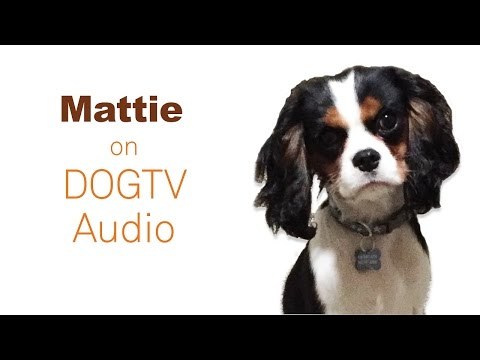 Meet Mattie!