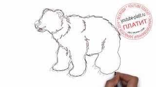 Как карандашом нарисовать бурого медведя(Как нарисовать медведя поэтапно карандашом за короткий промежуток времени. Видео рассказывает о том, как..., 2014-07-10T14:08:13.000Z)