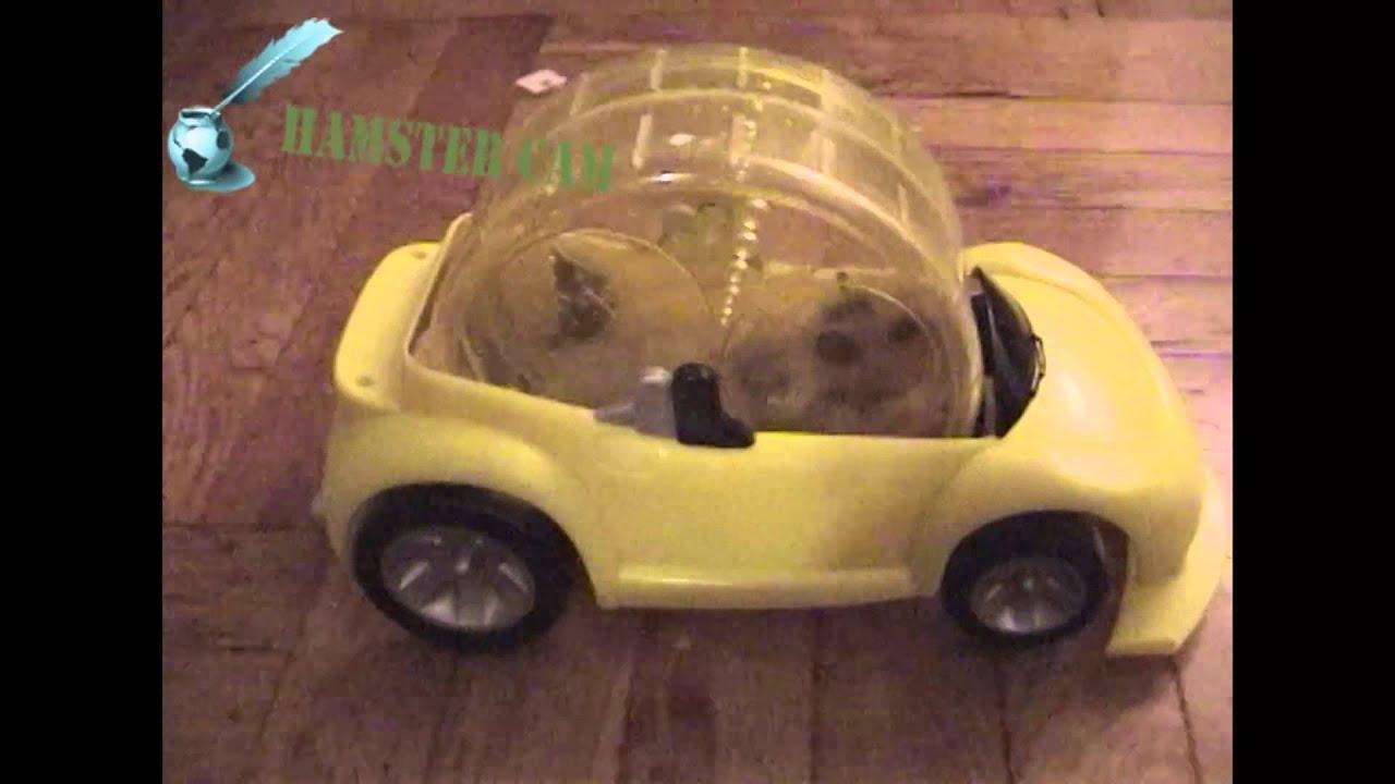 Hamlet Drives His Hamster Car