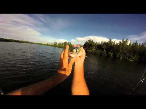 Vero Beach, Florida Big Ladyfish Fishing