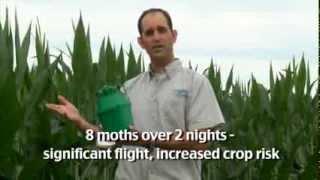 Using Insect Pheromone Traps - Usar Trampas de Feromonas para Insectos