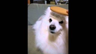 犬「タテガミはok」