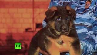 From Russia with love: Puppy sent to France to take place of Diesel