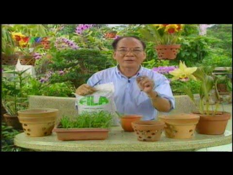 Kỹ thuật trồng hoa phong lan theo phương pháp cấy mô - Trung tâm Thông tin KH&CN Đà Nẵng