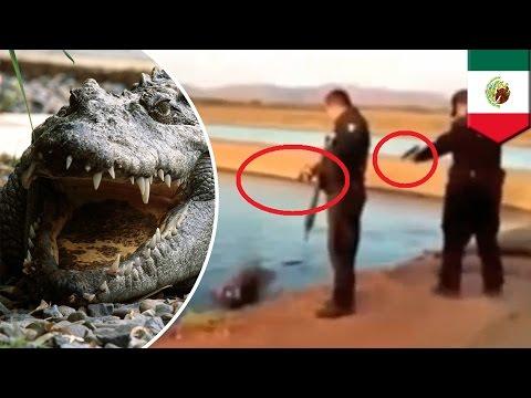 Policías mexicanos suspendidos luego de usar ametralladoras para acribillar a un cocodrilo