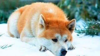 Собаку привязали к дереву в лесу и уехали... А она с грустью лежала под деревом и ждала...