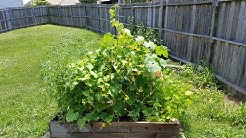 My Missouri Garden