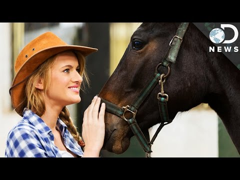 Did Horses Evolve To Read Human Emotions?