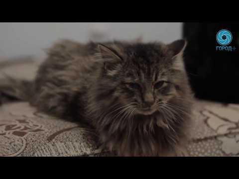 """Приют для кошек """"Брошенный Ангел"""""""