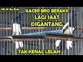 Lomba Kicau Burung Kacer Kacer Bro Beraksi Lagi Di Lapangan Eps  Milik Bg Biduk  Mp3 - Mp4 Download