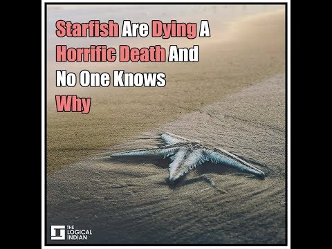 Starfish Are Dying A Horrific Death And No One Knows Why