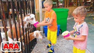 فلاد ونيكيتا يلعبان مع أمي في المزرعة